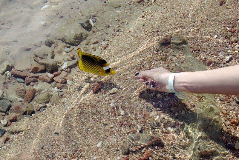 热带鱼的红海 免版税图库摄影