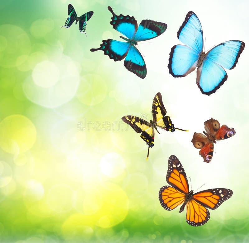 热带蝴蝶在庭院里 图库摄影