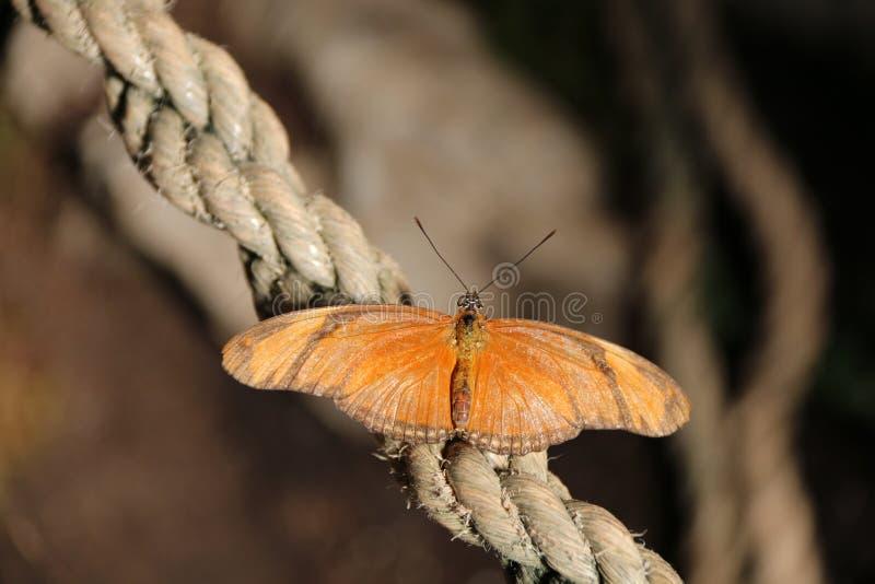 热带蝴蝶 图库摄影