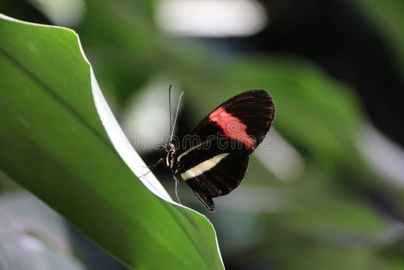 热带蝴蝶 免版税库存图片