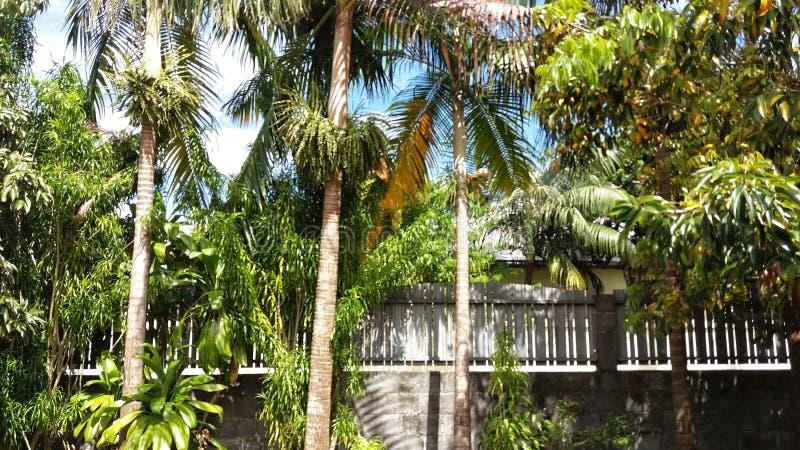 热带 图库摄影