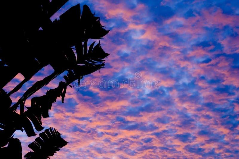热带1的日落 免版税库存图片