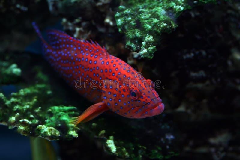 热带22条的鱼 免版税库存照片