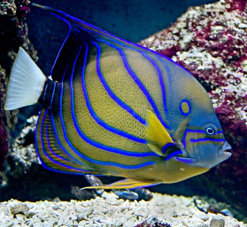 热带23条的鱼 库存照片