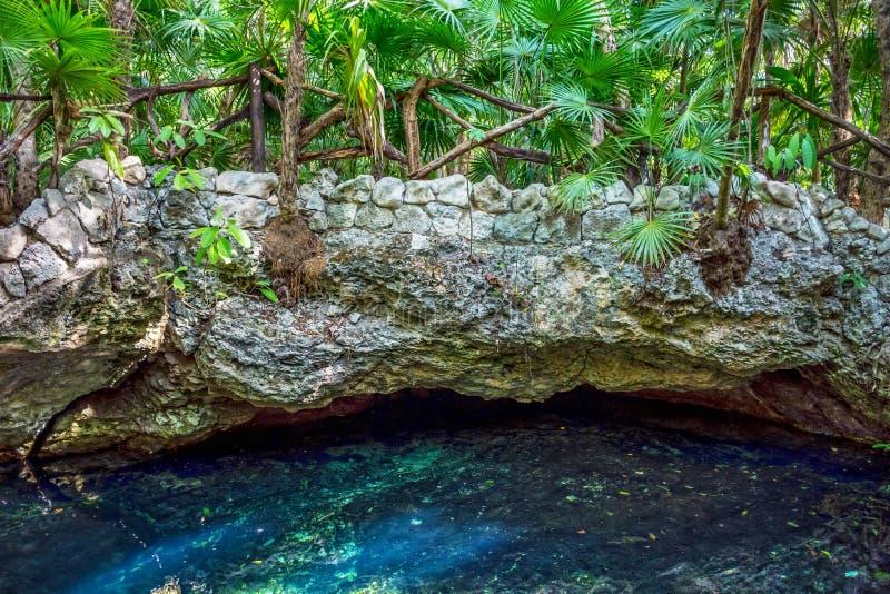 热带Cenote 免版税库存照片