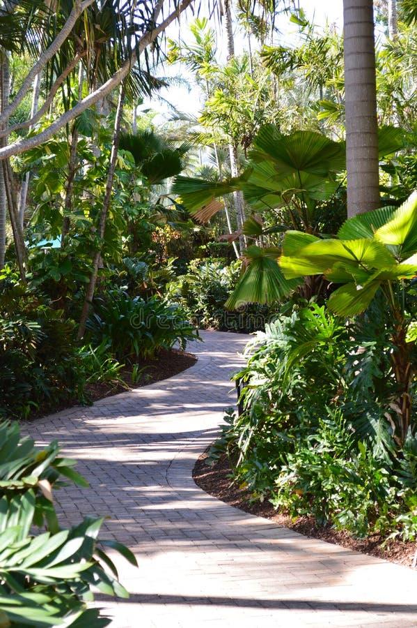 Download 热带foothpath异乎寻常的棕榈森林 库存照片. 图片 包括有 火箭筒, 节假日, 夏天, 假期, 异乎寻常 - 62527060