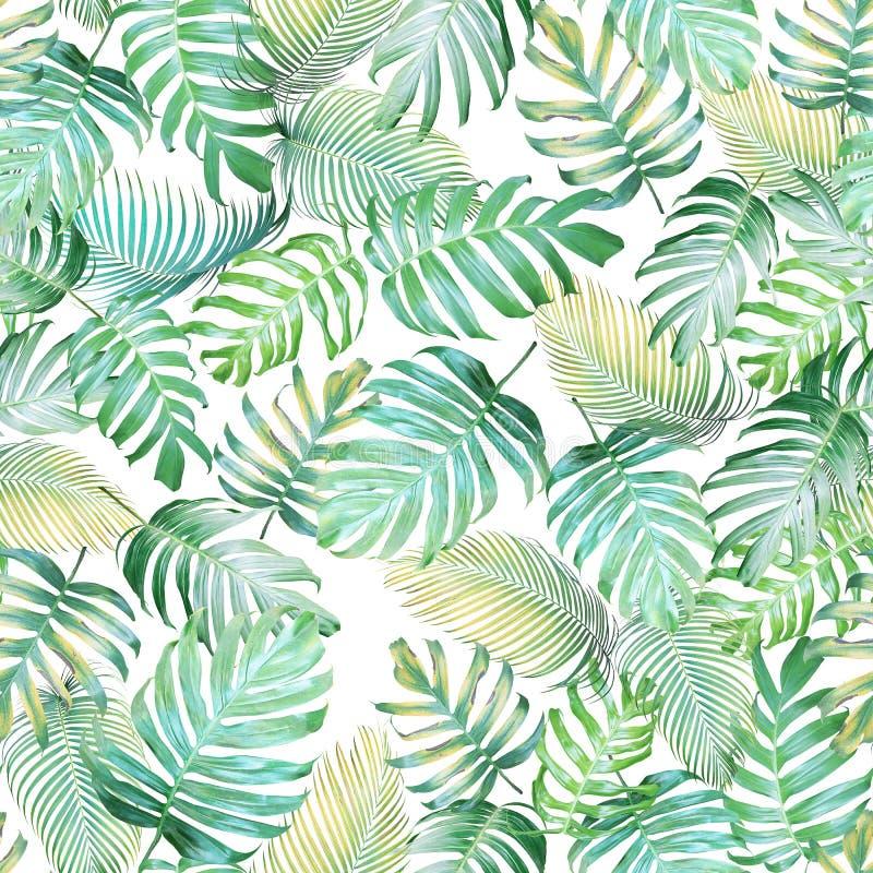 热带Monstera爱树木的人和pa的叶子无缝的样式 皇族释放例证