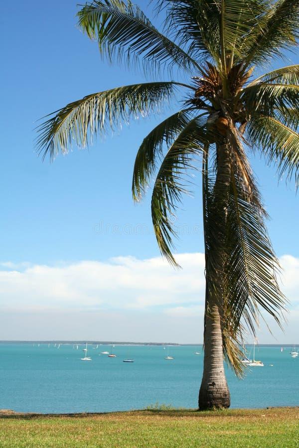 热带palmtree海滩 免版税库存图片