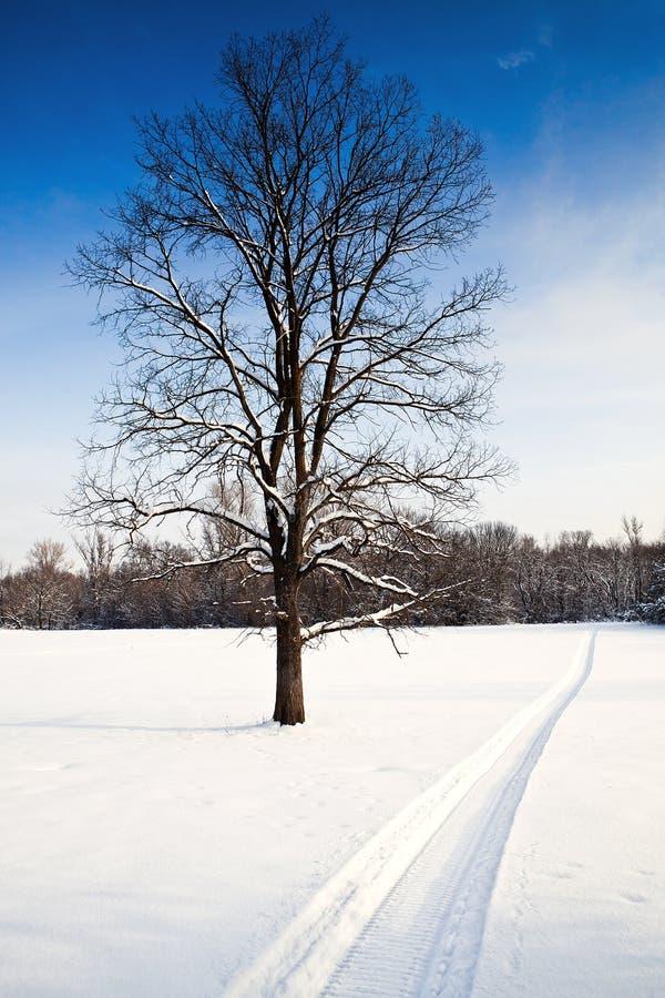 热气味雪上电车 免版税库存照片