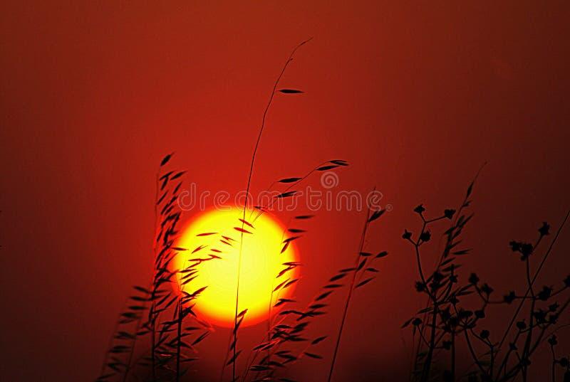 热的太阳夏天日落桔子 免版税图库摄影