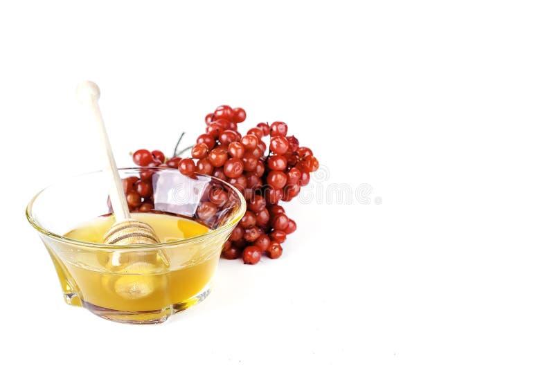 热的清凉茶用蜂蜜和荚莲属的植物, 库存图片