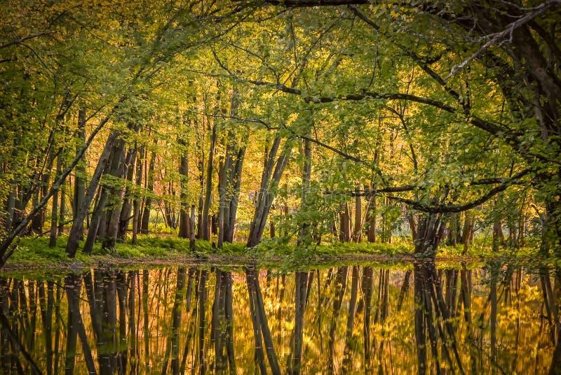 热的秋天颜色 库存照片