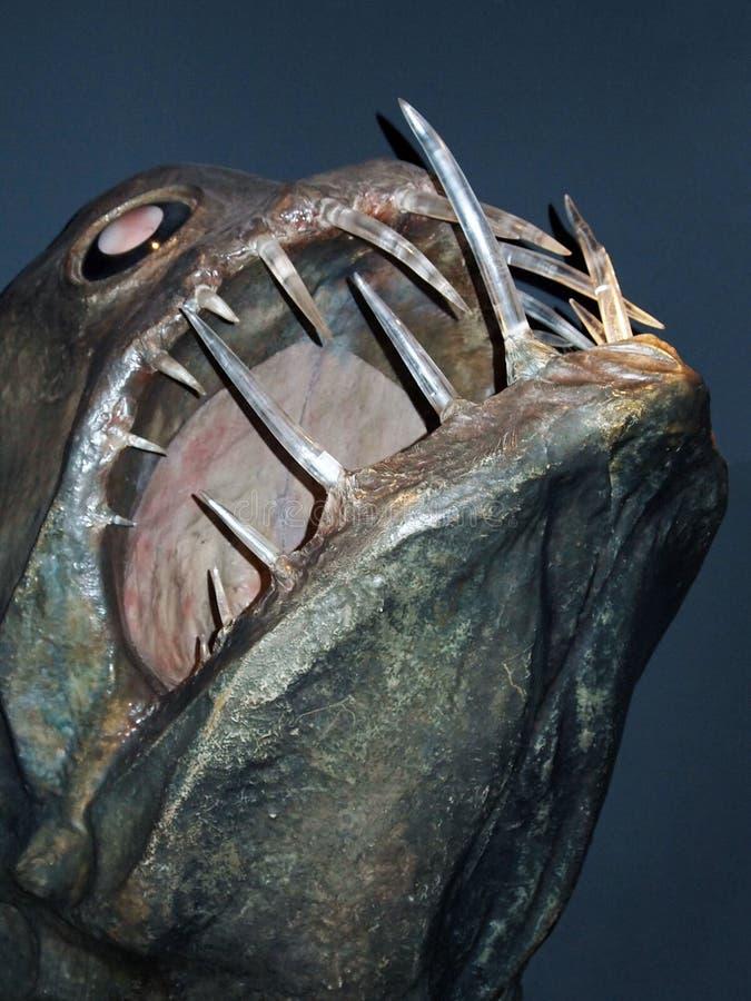 热那亚,意大利,2011年3月 一条可怕的巨大的鱼的头与大牙的在博物馆Acquario二赫诺瓦的水族馆 免版税库存照片