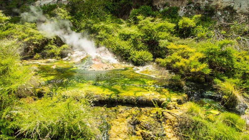 热量土地在罗托路亚 新西兰 库存照片