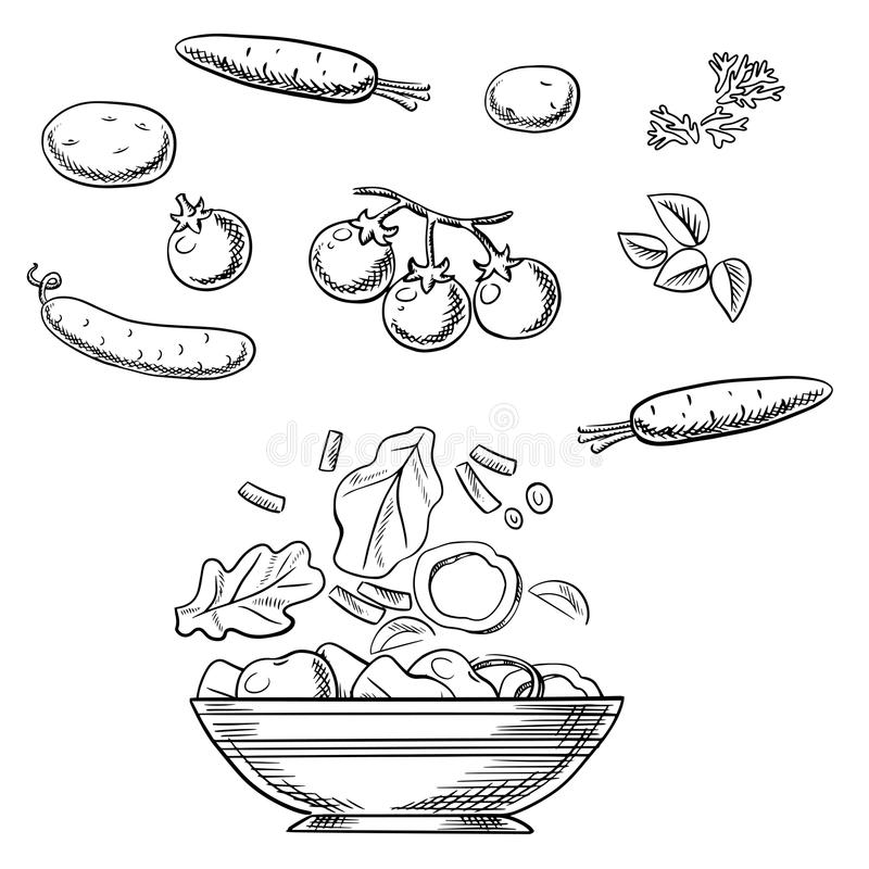 烹调新健康素食沙拉剪影 库存例证