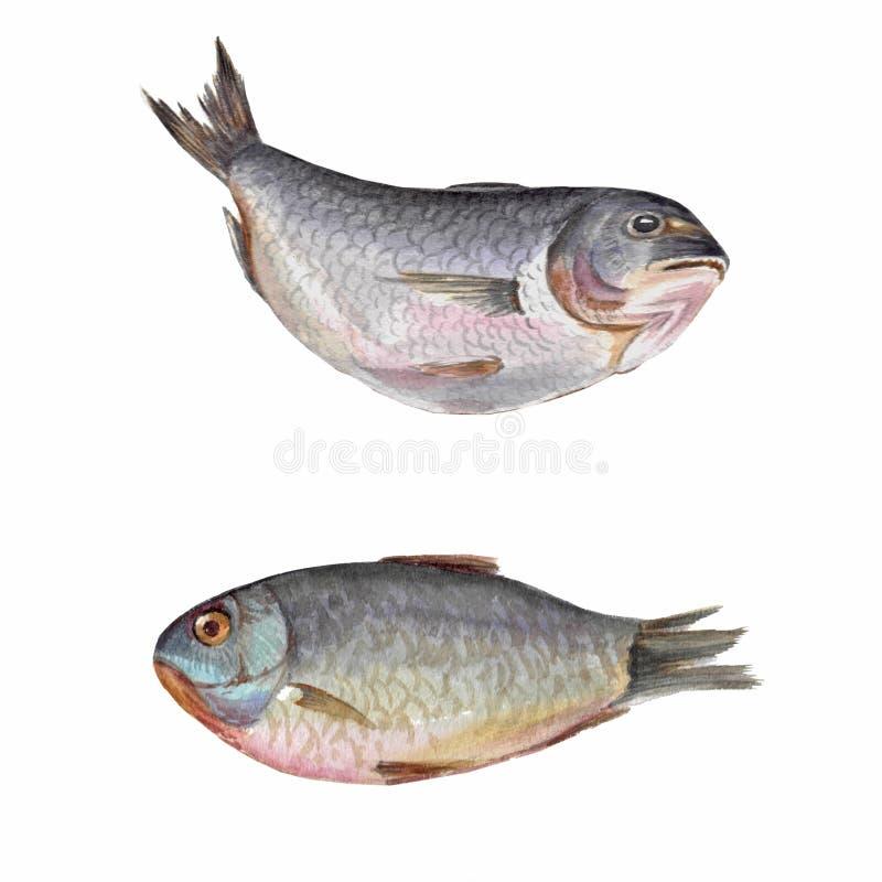 烹调的美丽的鲜鱼 皇族释放例证