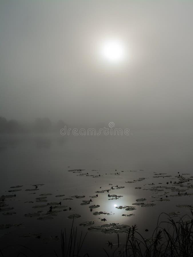仍然湖 库存照片