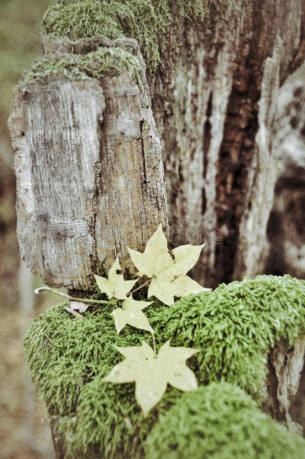 仍然秋天生活 库存图片