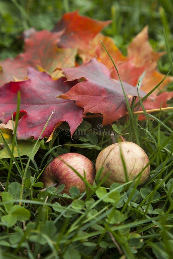 仍然秋天生活 图库摄影