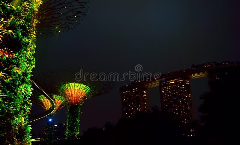 照亮与树的夜 免版税库存图片