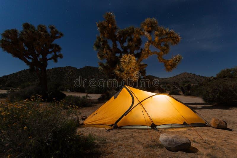照亮帐篷有约书亚树的被投的夜沙漠,约书亚树国家公园,加利福尼亚 免版税库存照片