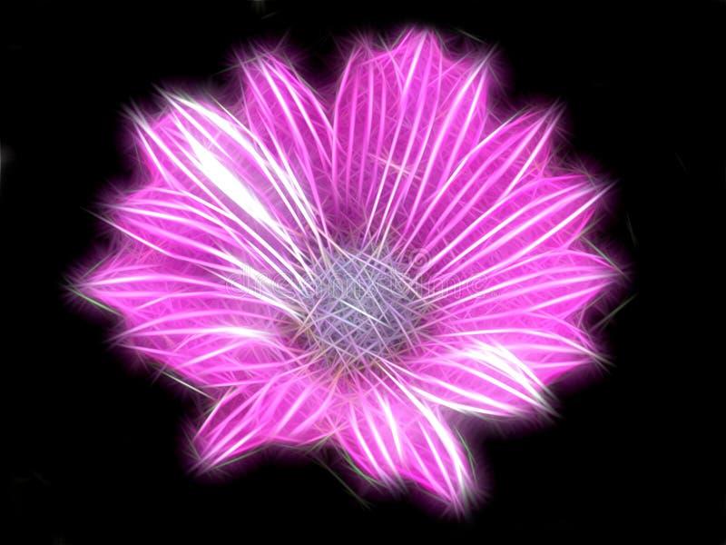 照亮桃红色花的分数维 皇族释放例证