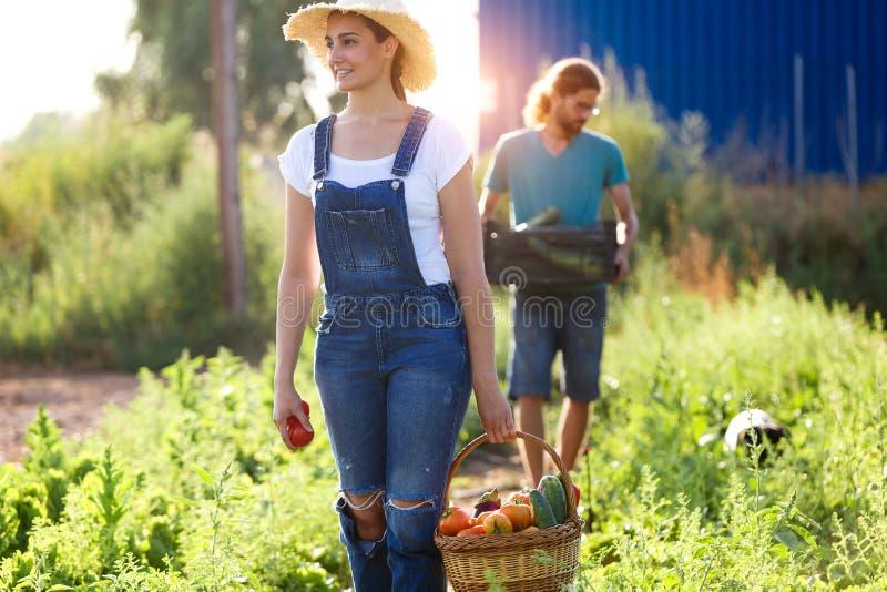 照料庭院和收集在条板箱的园艺家年轻夫妇新鲜蔬菜 免版税图库摄影