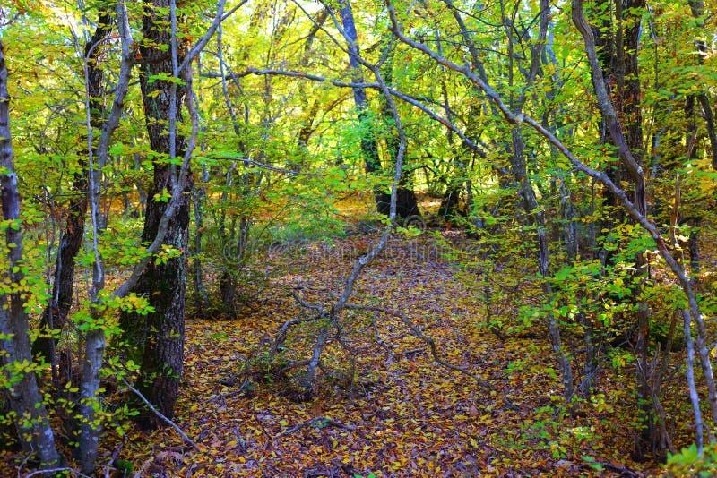 照片原始森林 免版税库存照片