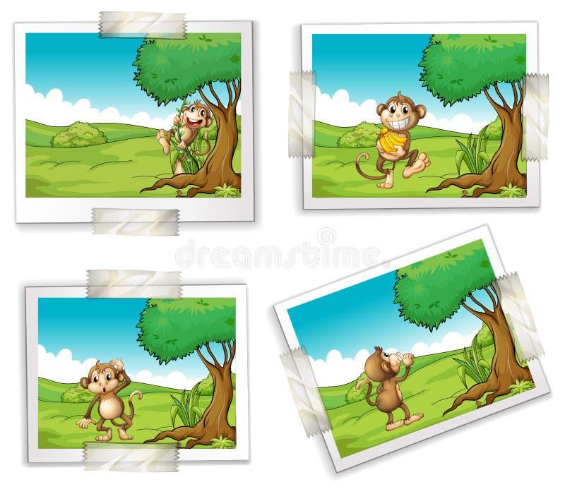 照片和猴子 向量例证