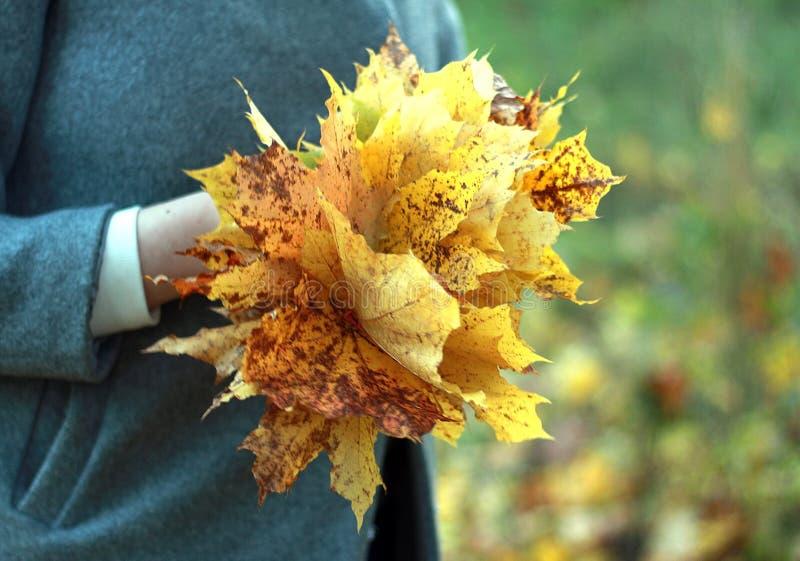 照片槭树黄色叶子秋天花束在女孩的手上 免版税库存图片