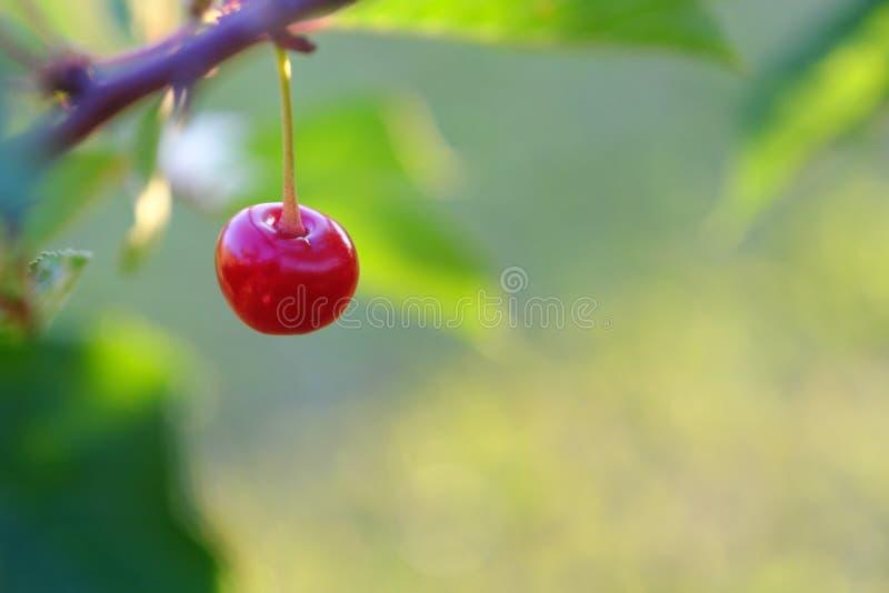 照片樱桃莓果特写镜头 库存图片