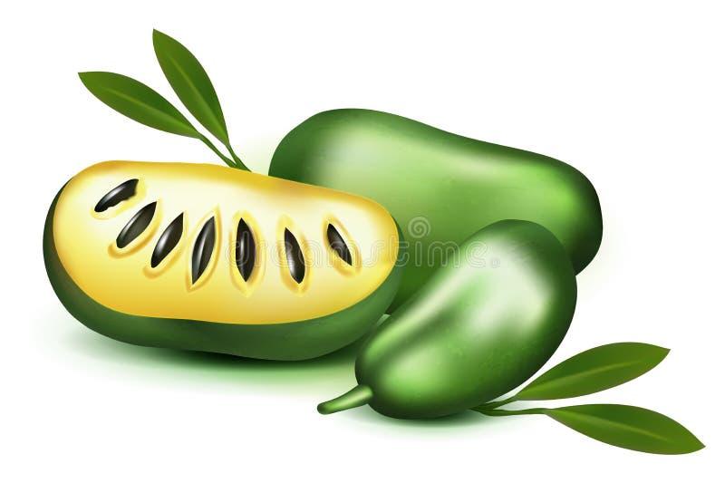 照片现实3d传染媒介黏浆状物质和种子与在白色背景番木瓜番木瓜果子合心皮果triloba隔绝的叶子,乳蛋糕app 皇族释放例证