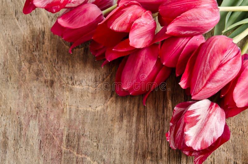 照片的角落从新鲜的郁金香 免版税图库摄影