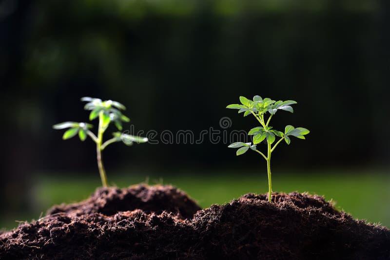 照片种植种子年轻人 图库摄影