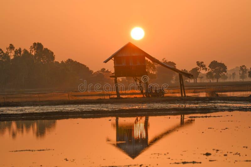 照片背后照明剪影东南亚沼泽地小屋 免版税库存图片