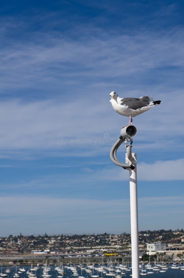 照相机鸥海域监视注意 图库摄影