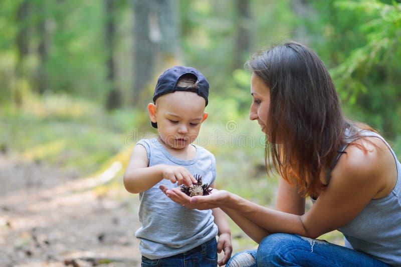 照顾和她的发现自然的小儿子看在杉木树锥体 库存照片
