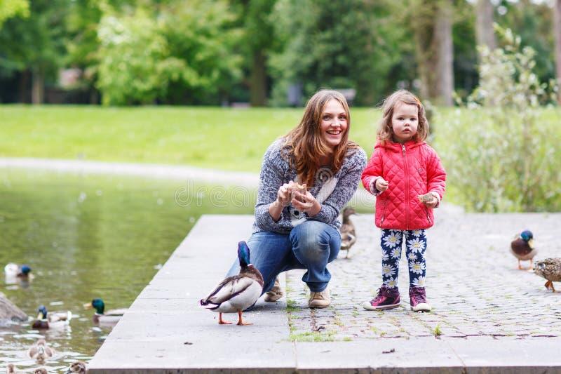 照顾和她的daugther哺养的鸭子在夏天 免版税库存图片