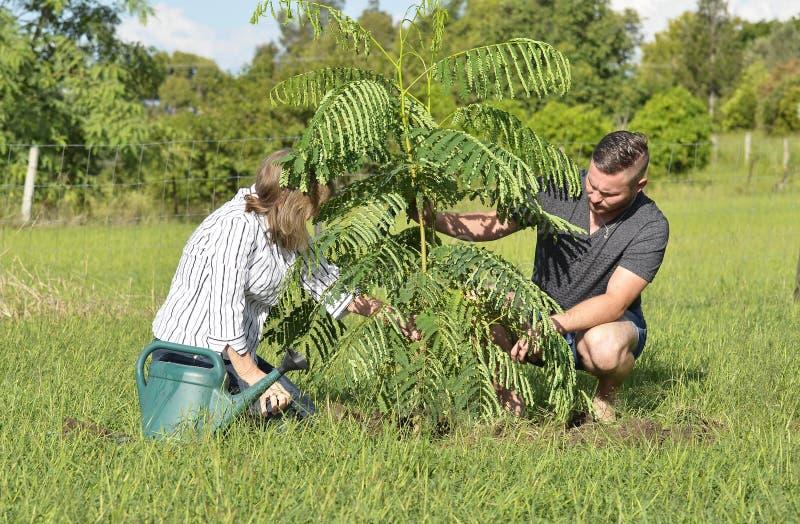 照顾种植新的树和关心的教的成人儿子 免版税图库摄影