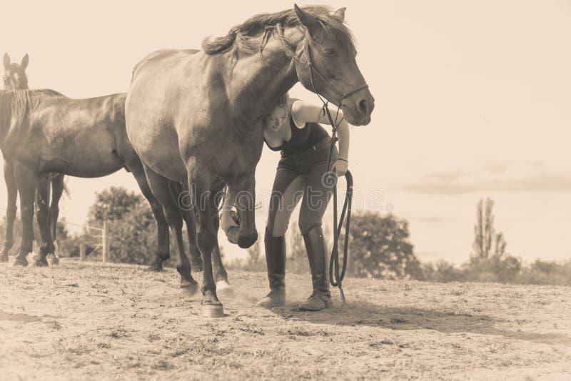 照顾马的骑师妇女 图库摄影