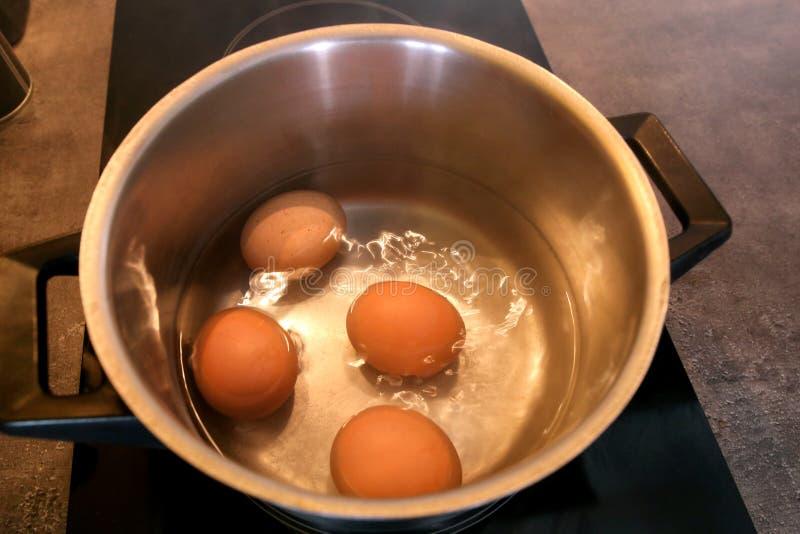 煮沸在金属罐的有机鸡蛋顶视图到在电火炉的平底深锅里在厨房里 在罐的四个鸡鸡蛋 图库摄影
