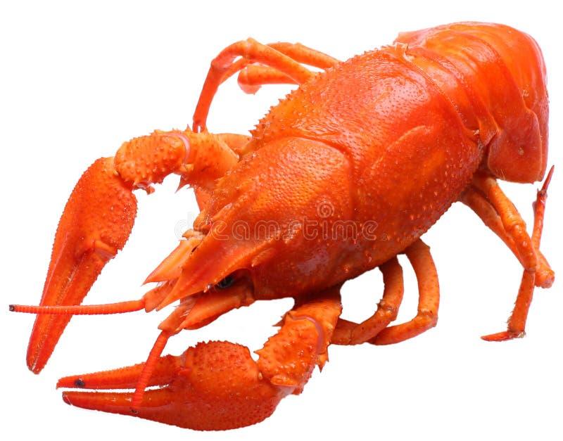 煮沸的小龙虾 免版税库存照片