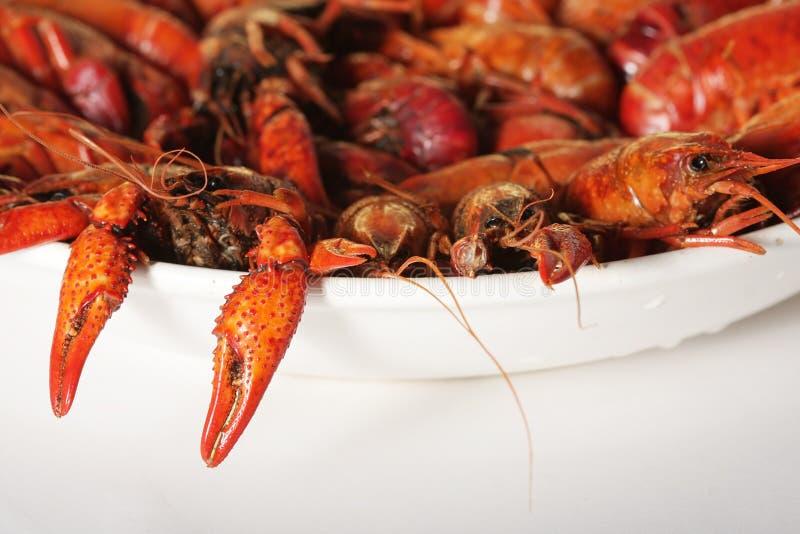 煮沸的小龙虾 免版税图库摄影