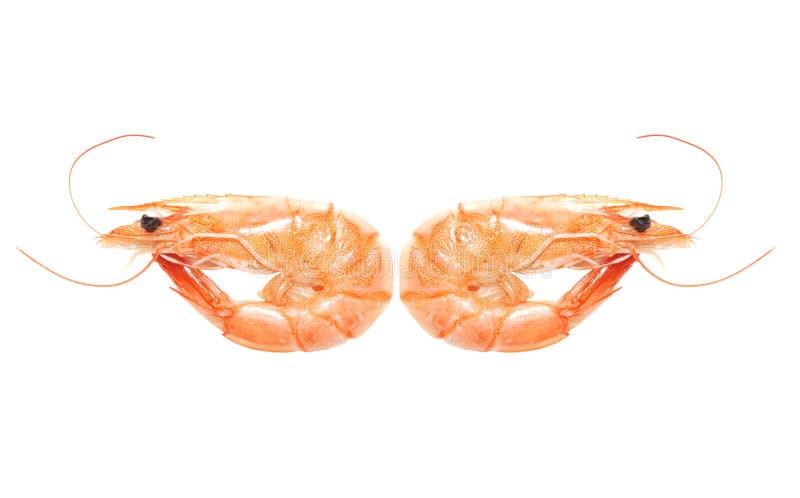 煮沸的瓷虾 库存照片