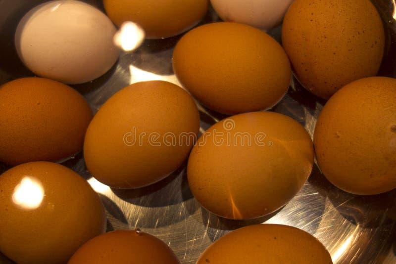 煮沸的白色和棕色鸡鸡蛋 免版税库存照片