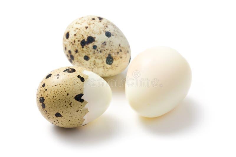 煮沸的蛋鹌鹑 免版税库存照片