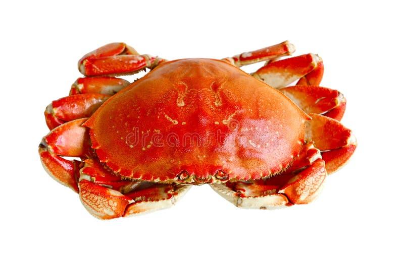 煮沸的螃蟹 免版税库存照片