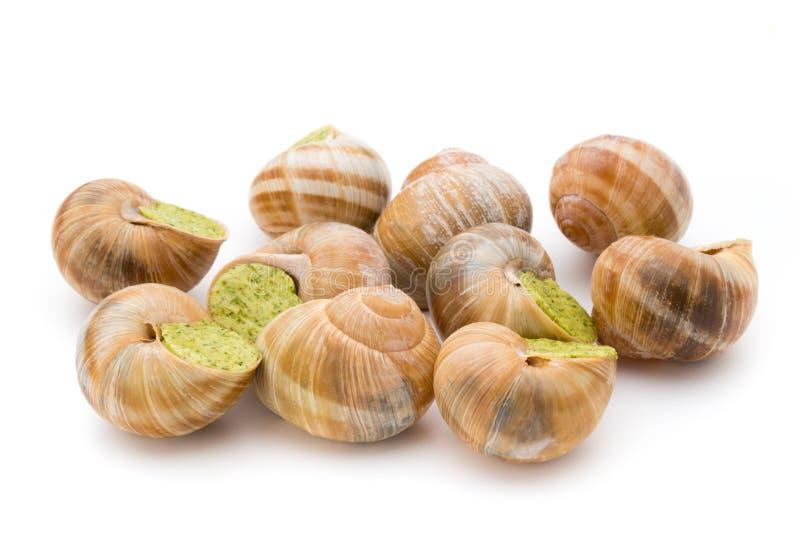煮熟的蜗牛纤巧 法国烹调被充塞的蜗牛 图库摄影