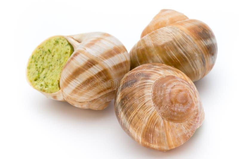 煮熟的蜗牛纤巧 法国烹调被充塞的蜗牛 免版税库存图片