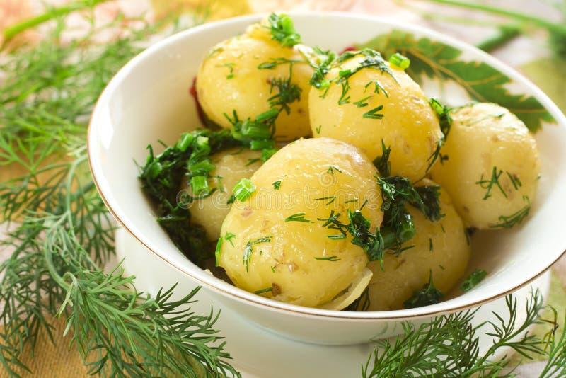 煮的马铃薯 库存照片